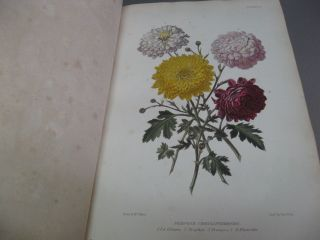 The Gardener's Assistant: Practical and Scientific. A Guide to the formation and Management of the Kitchen, Fruit and Flower Garden and the Cultivation of Conservatory, Green-House and Stove Plants with a Copious Calendar of Gardening Operations.
